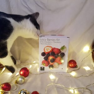 Christmas Gift Guide over taken by cats
